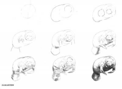 Категория рисунки цветов просмотров